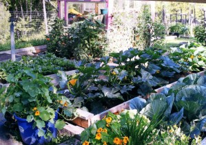 Karen Carpenter organic garden beds