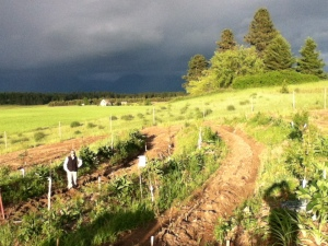 Crossroads Permaculture Food Forest