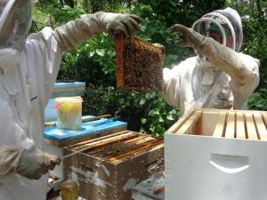 BeesSchneiderPeeps