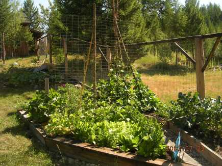 Mikes green garden earth friendly gardening at the organic oasis fandeluxe Image collections