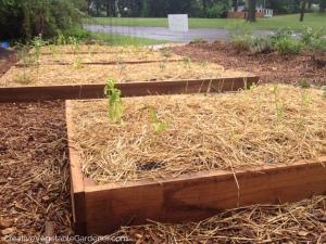 Spring-Vegetable-Gardening