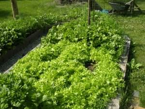 lettucePeaceSign