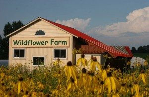 WildflowerFarm