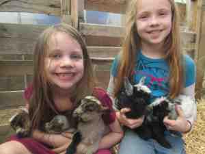 New Born Baby Goats!