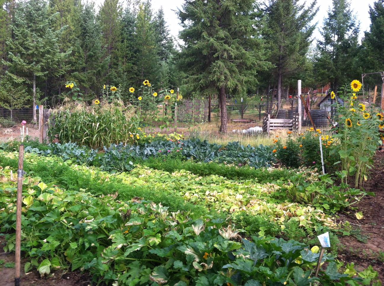2016 Organic Gardener Podcast Gardening Challenge