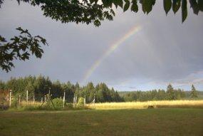 RainbowField-s