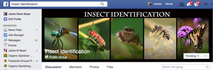 Insect identification FaceBook page