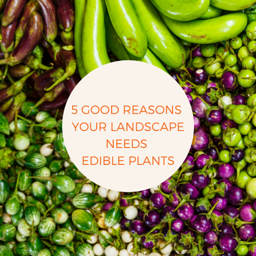 5 good reasons your landscape needs edible plants