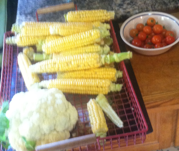 corn on the cob seed harvest with cauliflower 2015