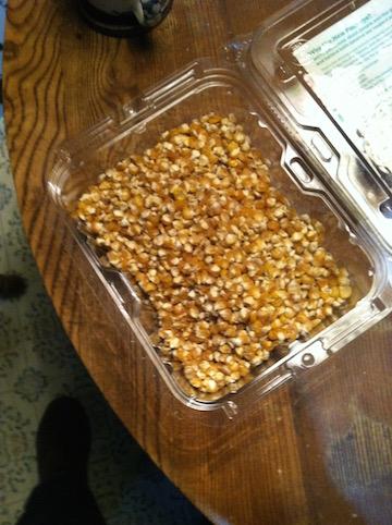 corn seed harvest 2015