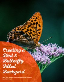 Creating A Bird & Butterly FIlled Backyard