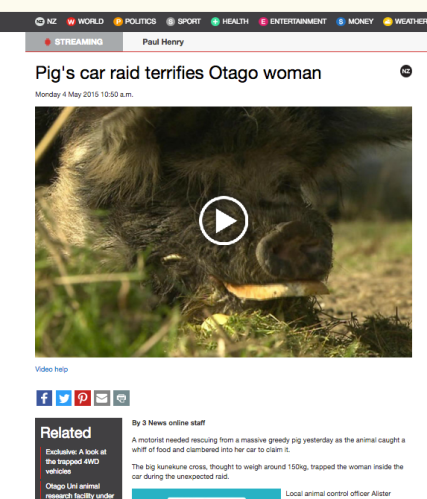 Pig's car raid terrifies Otago woman