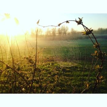 Honest To Goodness Farm Blog
