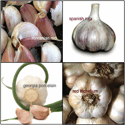 Good Seed Co Garlic Sampler Kit