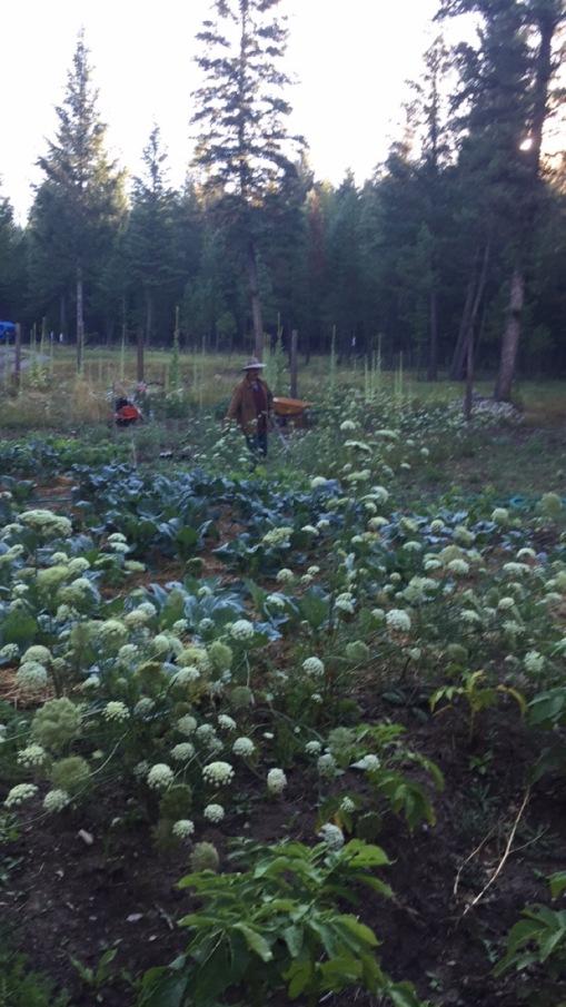 Mike's Green Garden MiniFarm 2016