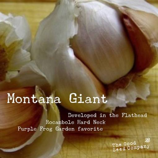 Good Seed Co Montana Giant Garlic