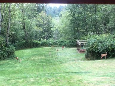 Deer Busters Fencing