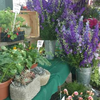 Fresh Herbs and Flowers at Saratoga Farmer's Market