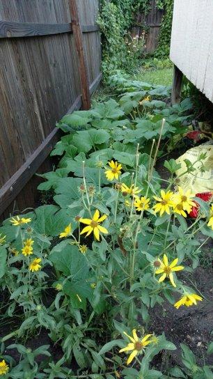 Oma Garden Companion Planting