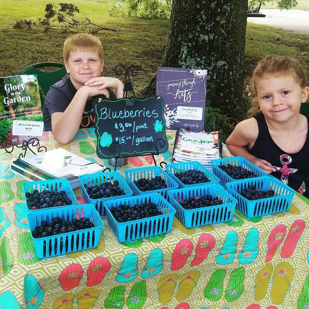 blueberries at the farmer's market