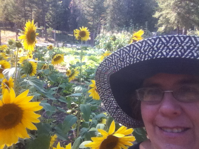 JMB Blue Hat Sunflowers