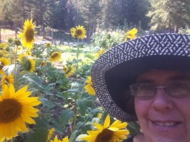 JMB Blue Hat Sunflowers