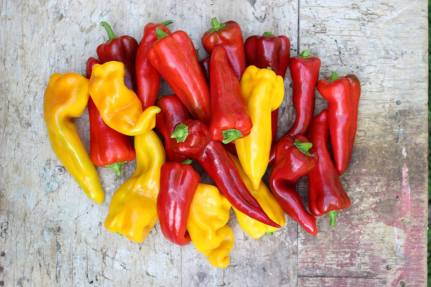 Megan Cain Super Easy Food Preserving red and yellow peppers
