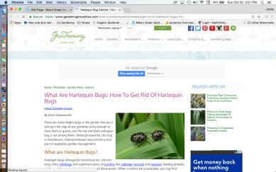 What Are Harlequin Bugs Gardening Know How Website