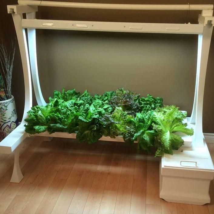 Hope Innovations Garden Of Eden Hydroponics Kit