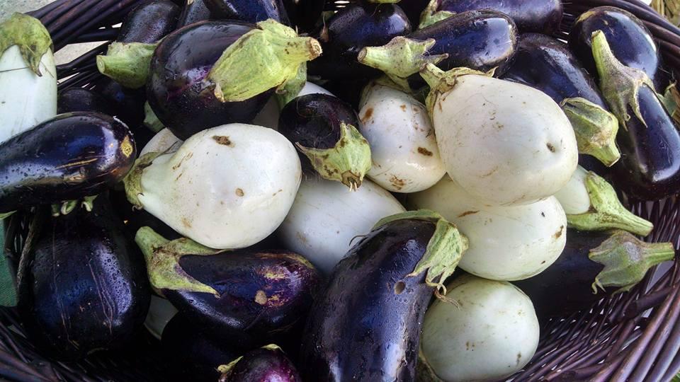 Abe's Acres Eggplants