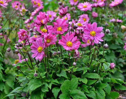 pinkflowers.jpg
