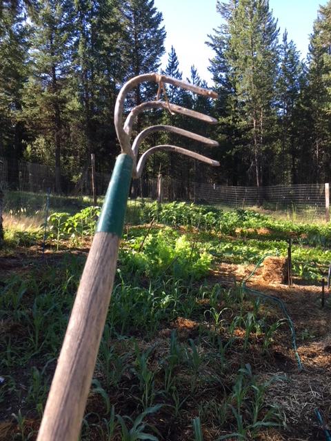 claw Hoe aka cultivator hoe garden tool