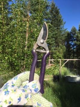 pruners garden tool