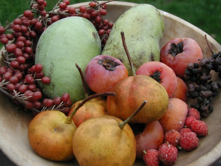 autumn's uncommon fruits.jpg