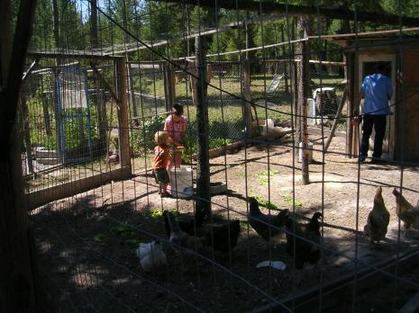 grandkids in the chicken pen at Mike's Green Garden