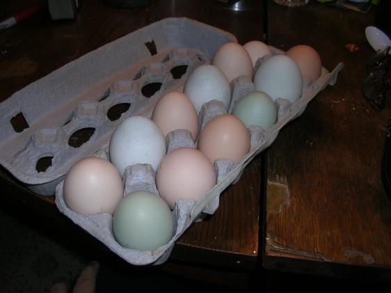 Eggs2008.JPG