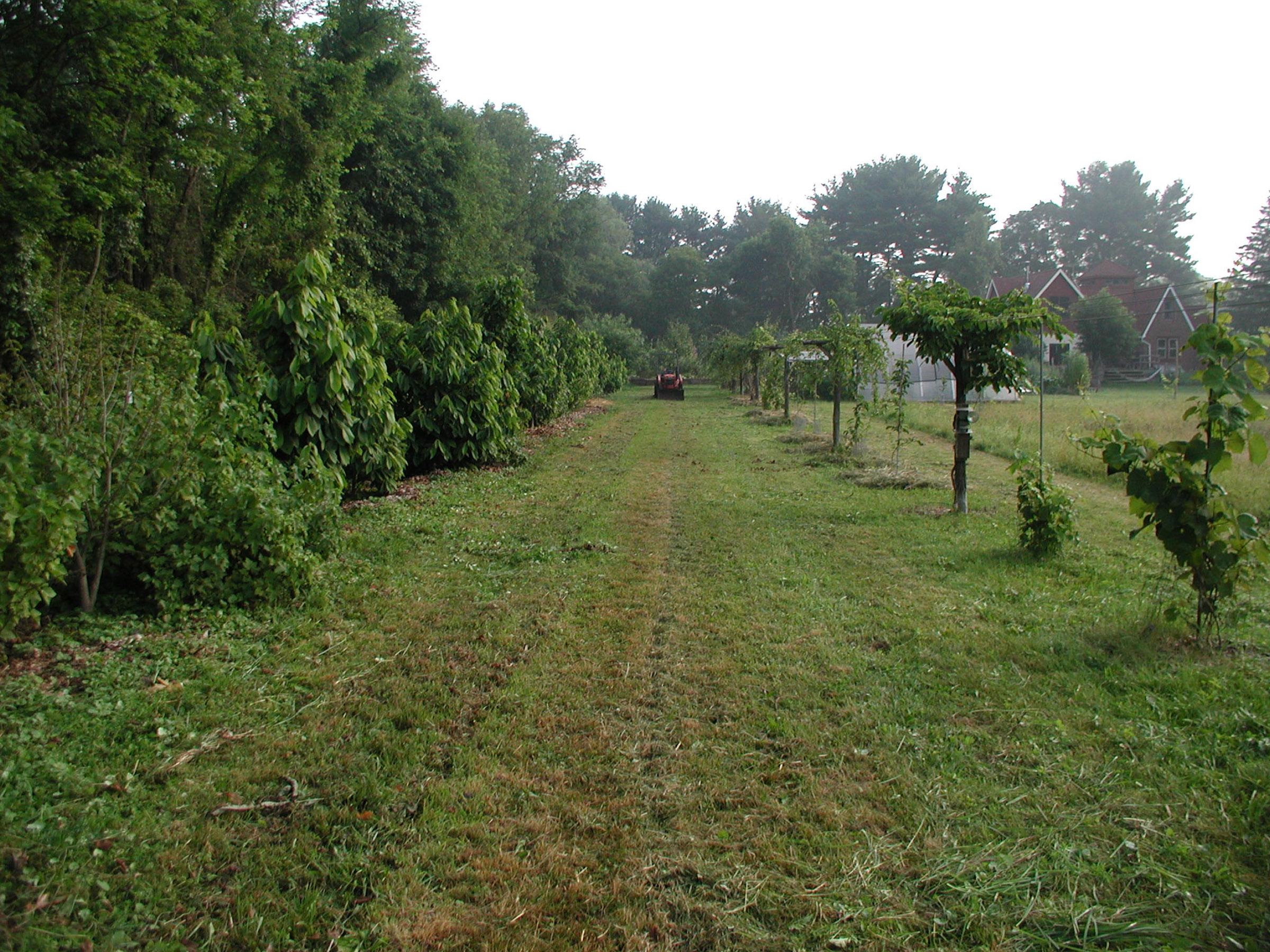 Field planting.jpg