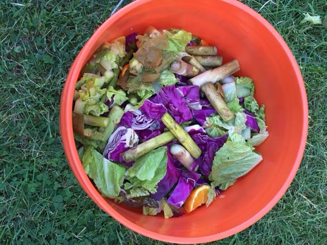 CompostBucket.jpg