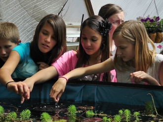 005-school-greenhouse-33-growingspaces.jpg-nggid015-ngg0dyn-330x247x100-00f0w010c011r110f110r010t010.jpg