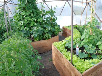 015-growing-spaces-greenhouses-33-benjamin.jpg-nggid0215-ngg0dyn-330x247x100-00f0w010c011r110f110r010t010.jpg