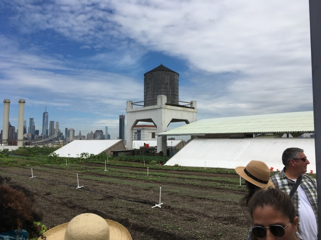Brooklyn Grange Farm on the Roof NYC 2018
