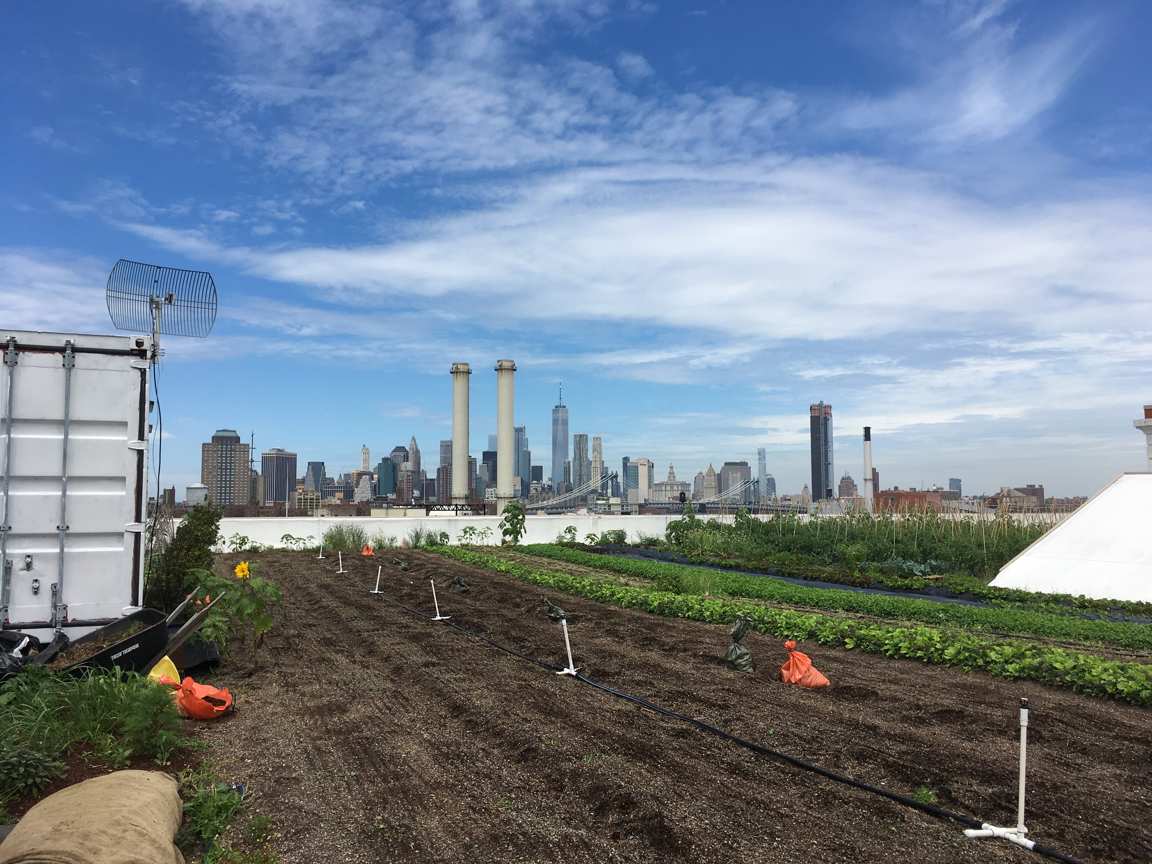 Brooklyn Grange Farm on the Roof NYC June 2018