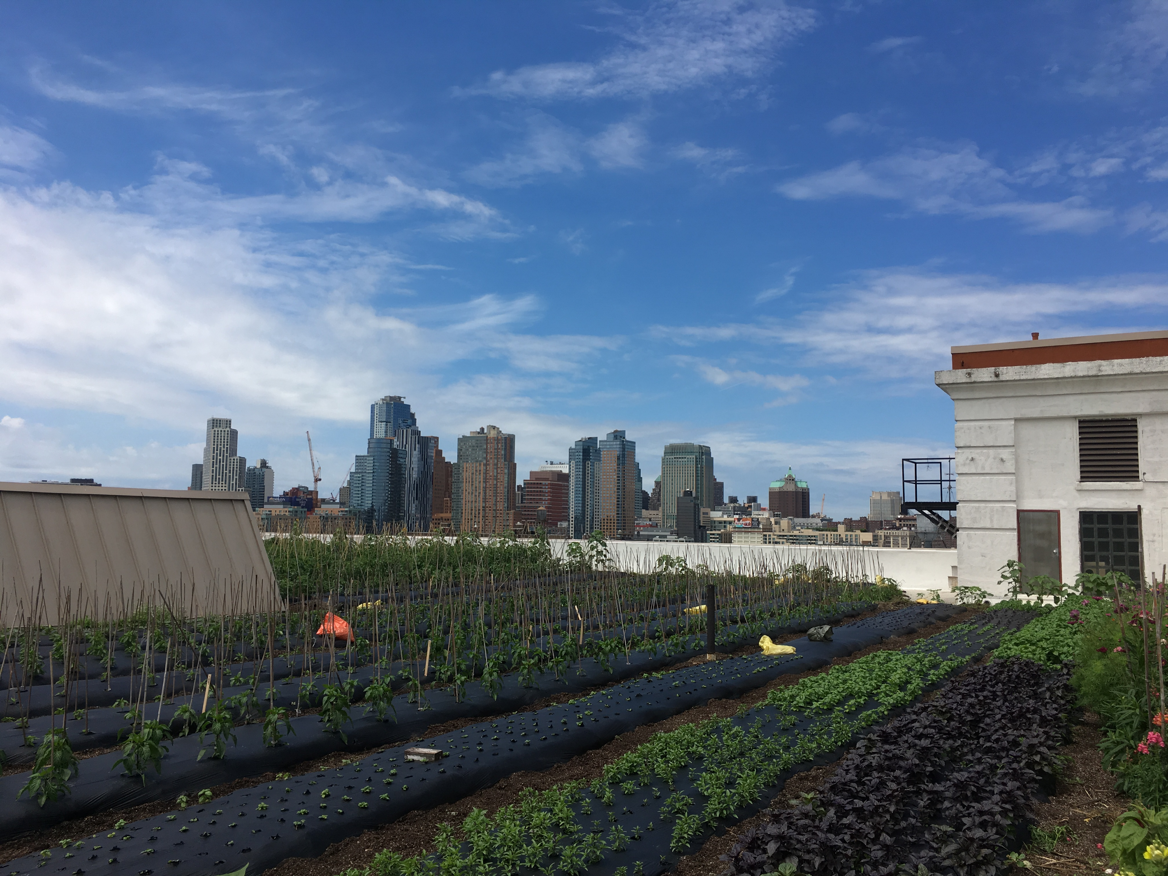 Brooklyn Grange Farm on the Roof 2018