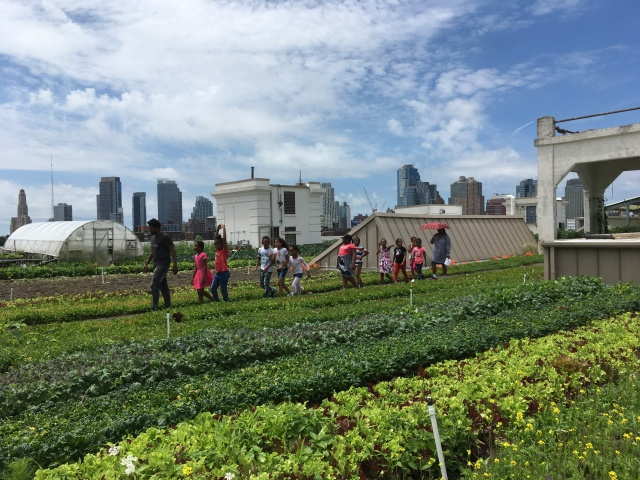 CityGrowers Kids at Brooklyn Grange