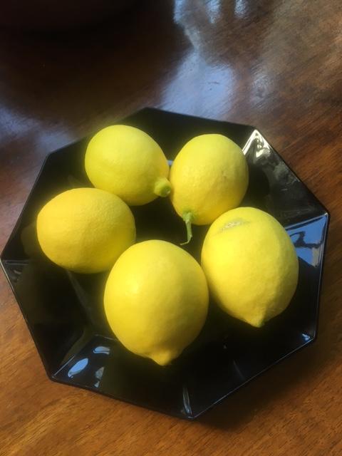 Mom's plate of Meyer lemons from her lemon tree