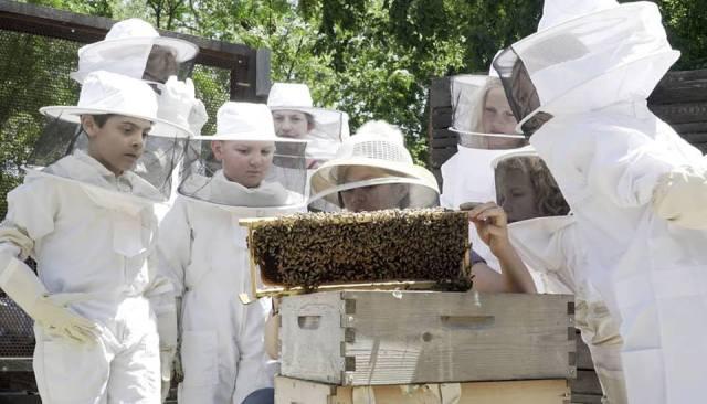 BeeHiveKids