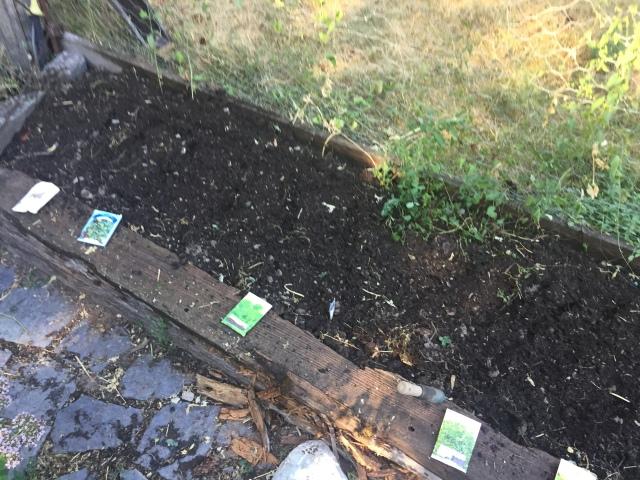 Arugula planted July 27, 2017 Harvested December 2, 2017