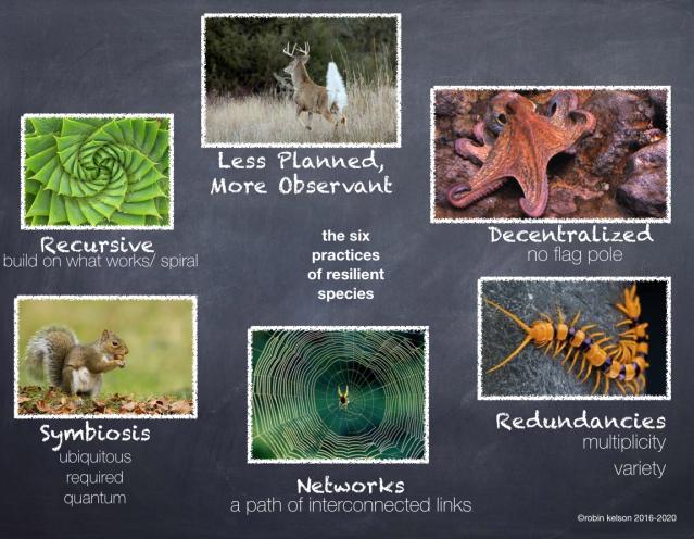6 Practices of Resilient Species
