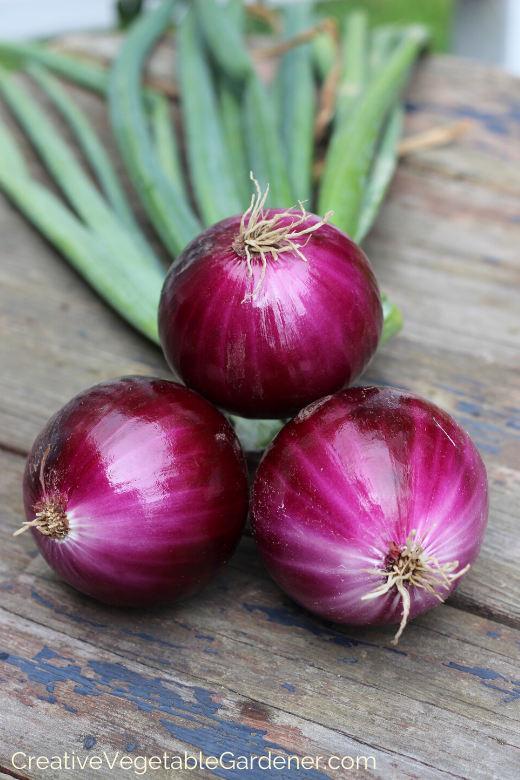 how-to-plant-onions-1